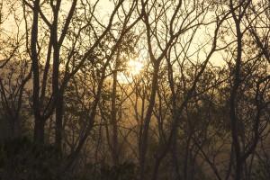 Vista panoramica - amanecer 2